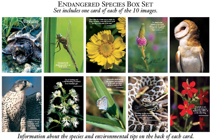 Endangered Species Greeting Cards
