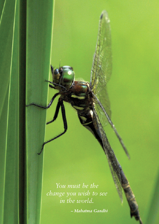 Hine's Emerald Dragonfly Greeting Cards, blank inside