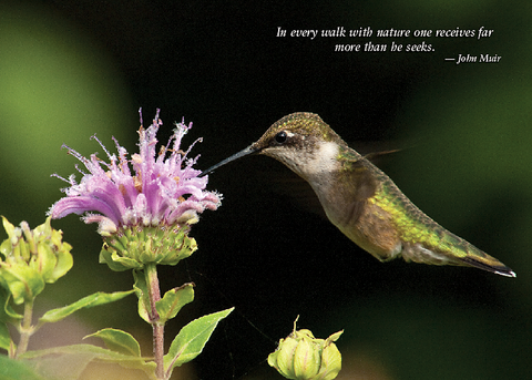 Hummingbird Greeting Cards, blank inside