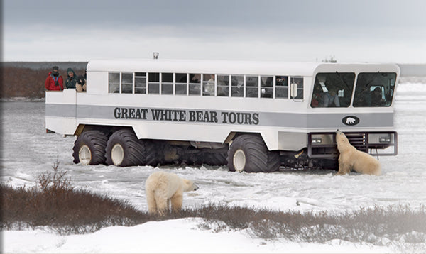 Great White Bear Tour Bus in Manitoba, Canada