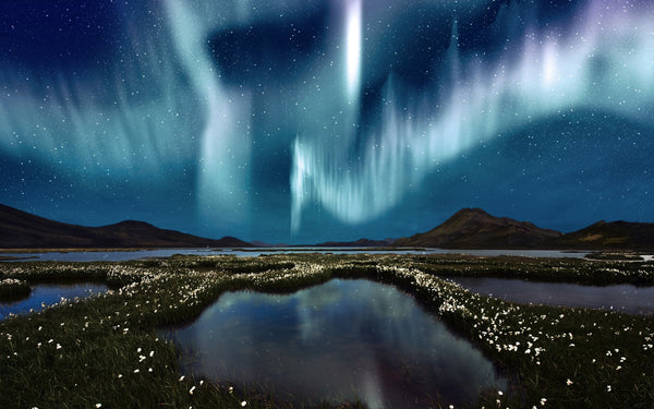 Yukon's Terre Boreale Northern Lights