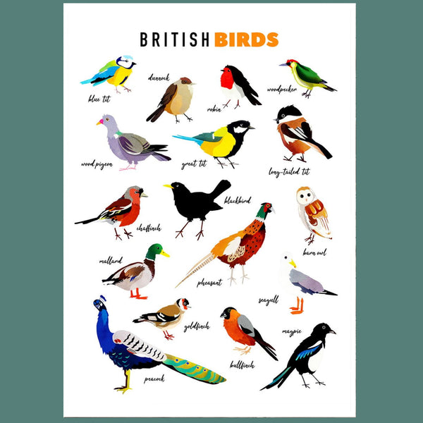 British Birds Illustrated Print