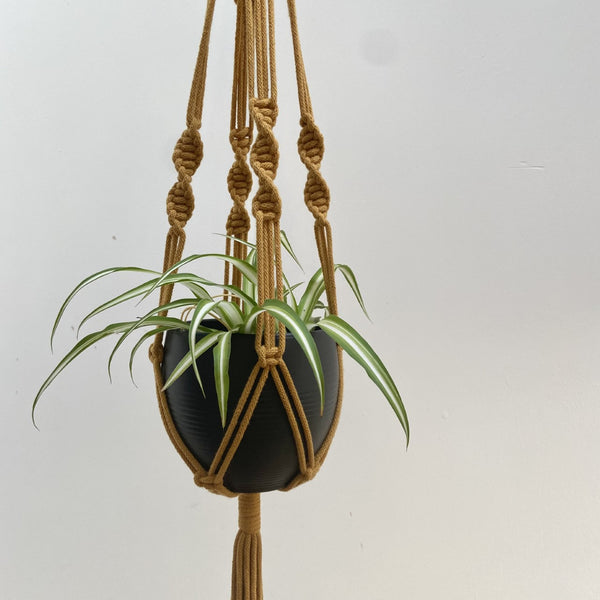 Spiral Macramé Plant Hanger available in a range of colours