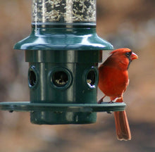 Load image into Gallery viewer, SQUIRREL BUSTER PLUS BIRD FEEDER