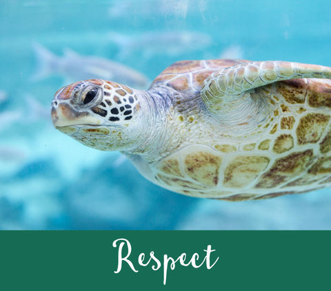 Our Values - Respect