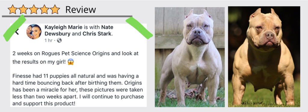 Customer named Kayleigh as success using Origins 5in1 with her dogs