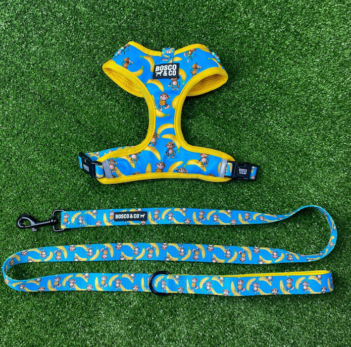 Padded Adjustable Dog Harness and leash Bundle