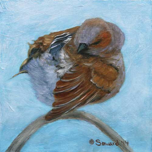 Preening Omao, copyright Sarah Soward, painting of Hawaiian omao bird