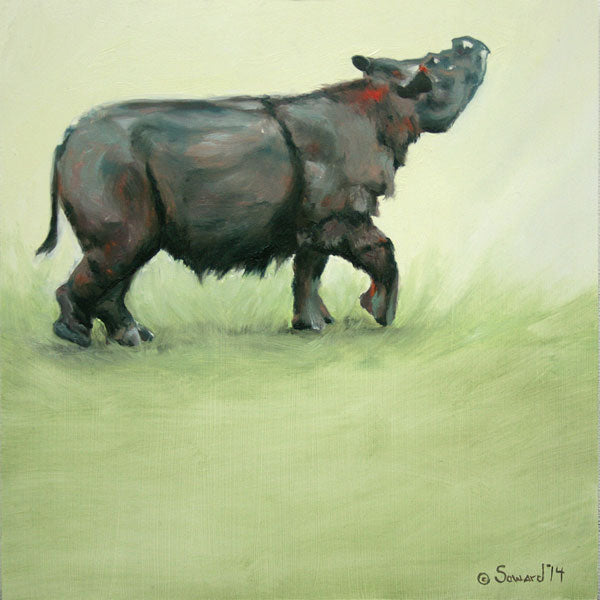 Suci Rhino, copyright Sarah Soward, image of Sumatran rhino being happy