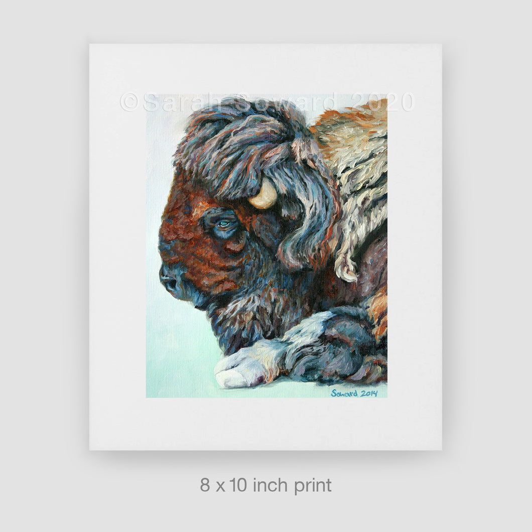 My Buffalo is a Bison, Limited Edition Print