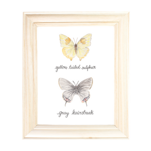 Yellow Tailed Sulphur and Grey Hairstreak Butterfly Art Print