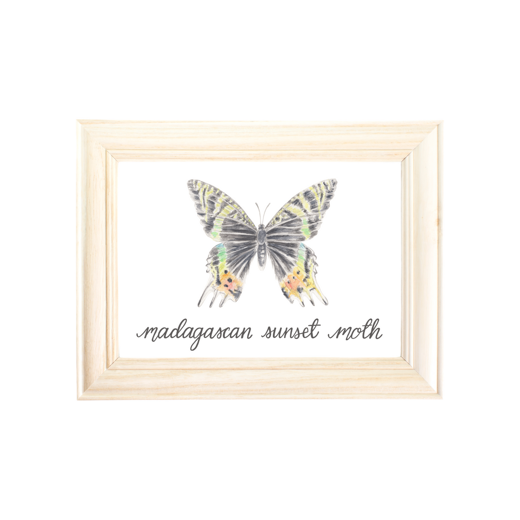 Madagascan Sunset Moth Art Print