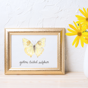 Yellow Tailed Sulphur Butterfly Print