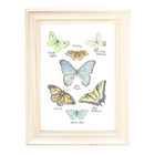 Butterfly Collection Art Print