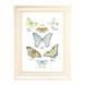 Butterfly Collection Art Print 1