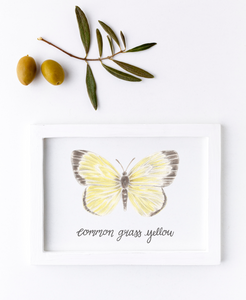Common Grass Yellow Butterfly Print