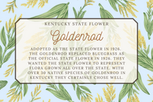 Load image into Gallery viewer, Kentucky State Map Post Card