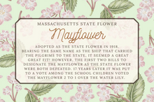 Load image into Gallery viewer, Massachusetts State Map Folded Card