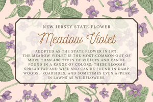 New Jersey State Map Card