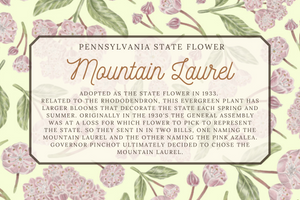 Mountain Laurel Illustration Patterned Tea Towel -  Pennsylvania state flower - Connecticut state flower