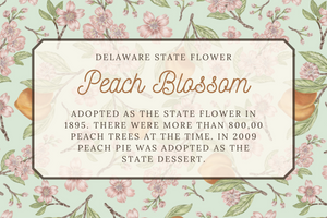 Delaware State Map Post card