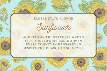 Load image into Gallery viewer, Kansas State Map Post Card