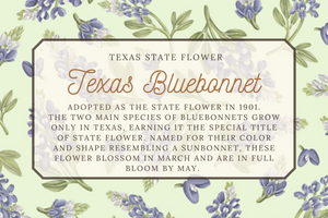 Texas Bluebonnet Phone Case