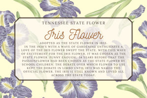 Iris Floral Illustration Scarf - Tennessee State Flower Design