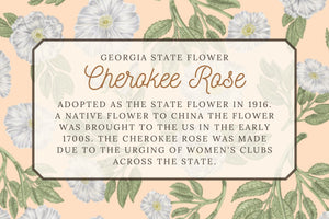Cherokee Rose Pattern Scarf - Georgia state flower Illustration