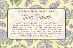 Lilac Illustrated Floral Tea Towel - New Hampshire State Flower