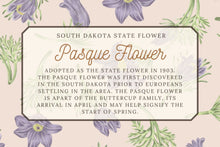 Load image into Gallery viewer, Pasque Flower - Illustrated Scarf - South Dakota State Flower