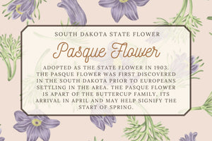 Pasque Flower - Illustrated Scarf - South Dakota State Flower