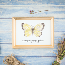 Load image into Gallery viewer, Common Grass Yellow Butterfly Print