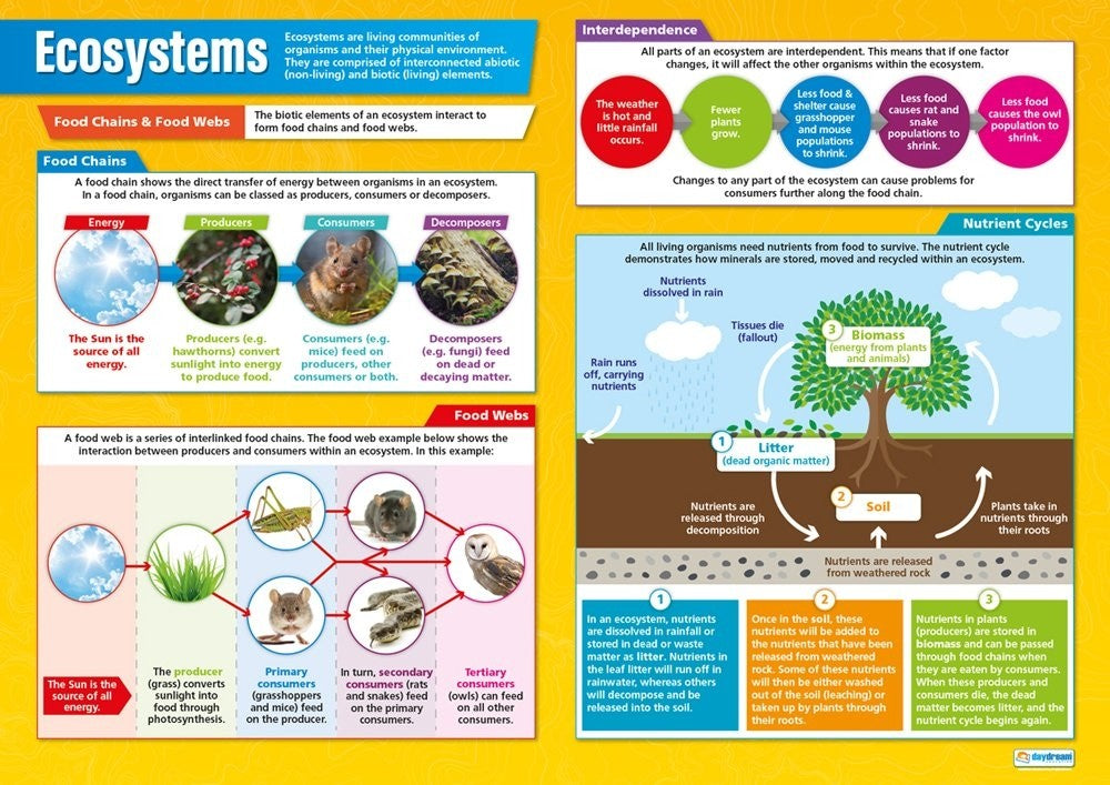 Bright Education Australia, Teacher Resources, Poster, A1 Poster, Geography, Biomes, Plants, Animals, Climate, Earth Science, Ecosystems