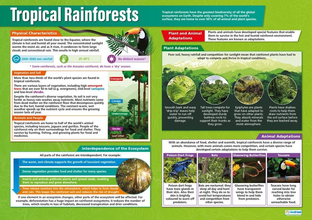 Bright Education Australia, Teacher Resources, Poster, A1 Poster, Geography, Climate, Earth Science, Tropical Rainforests, Biomes, Plants, Animals, Ecosystems