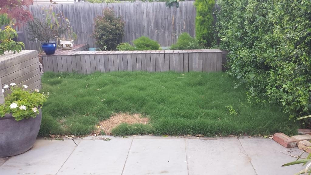 Damaged Instant Lawn