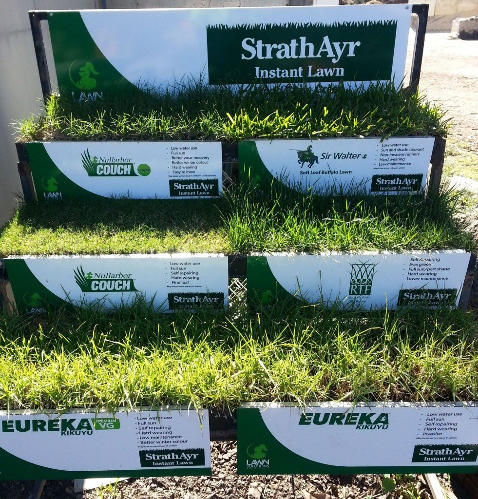 Instant Turf Review - Drought Tolerant Turfs