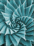 Diamond Painting Floral Full Square/Round Drill 5D DIY Cactus Flower Embroidery Cross Stitch - Great Breakthrough