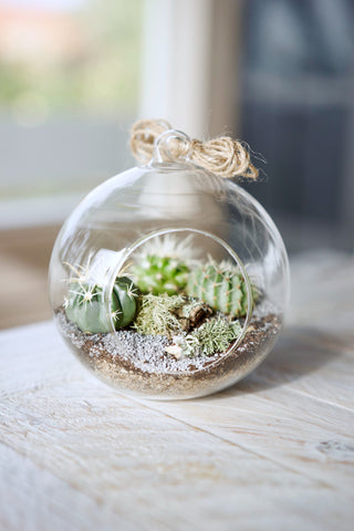 Cacti Desert Orb DIY Kit