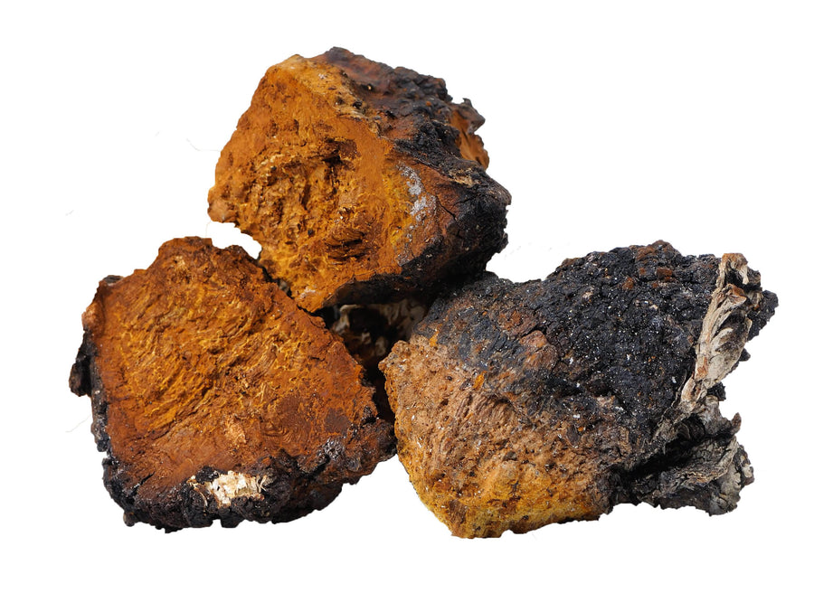 Chaga Mushroom Powder Herb & Root Powders Z Natural Foods
