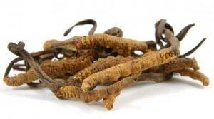 Cordyceps Mushroom Extract Powder Tonics Z Natural Foods