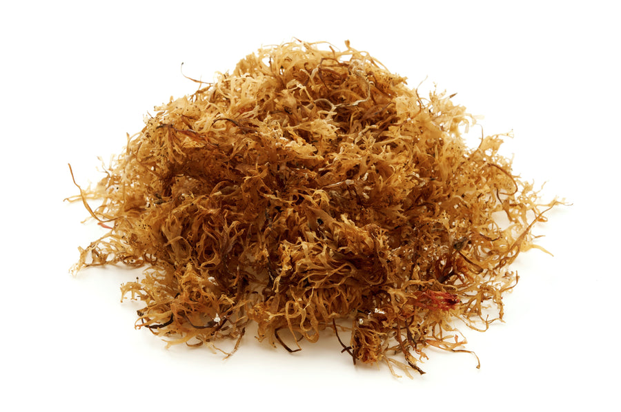 Irish Moss Powder - Organic Algae & Seaweeds Z Natural Foods