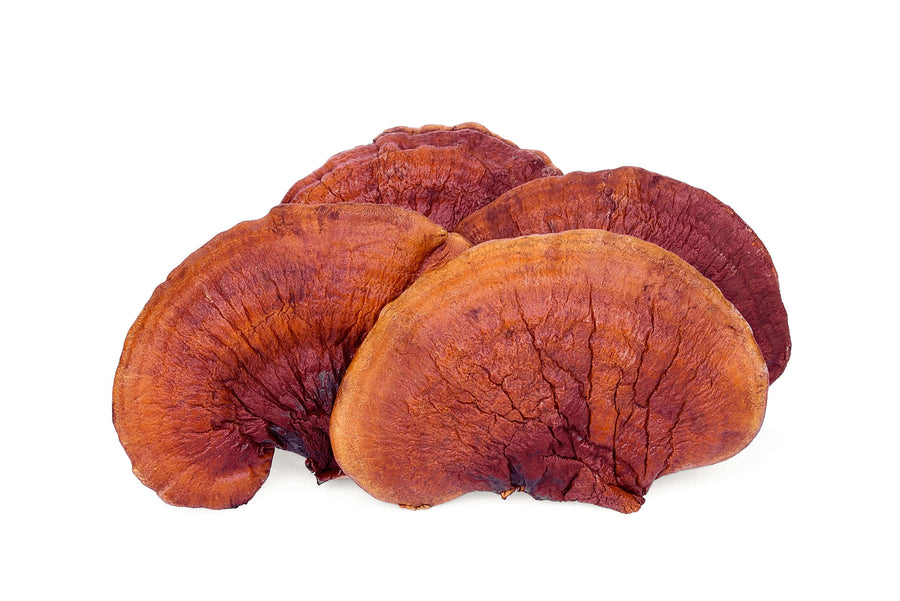 Red Reishi Mushroom Extract Powder (Lingzhi) Mushroom Powders Z Natural Foods
