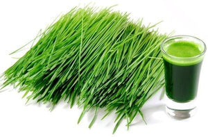 Wheatgrass Juice Powder - Organic Vegetable, Leaf & Grass Powders Z Natural Foods