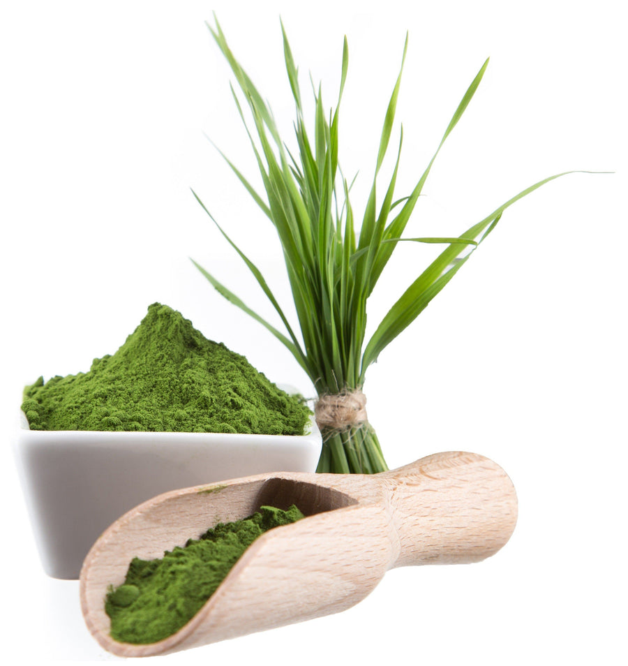 Wheatgrass Powder - Organic Vegetable, Leaf & Grass Powders Z Natural Foods