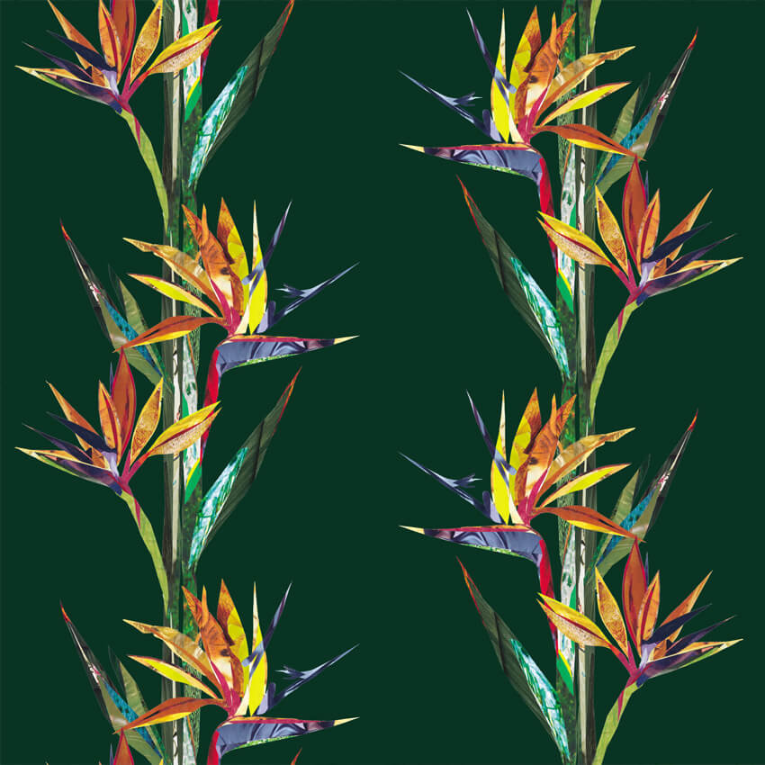 Bird Of Paradise- original wallpaper designs by J. D. Pepp
