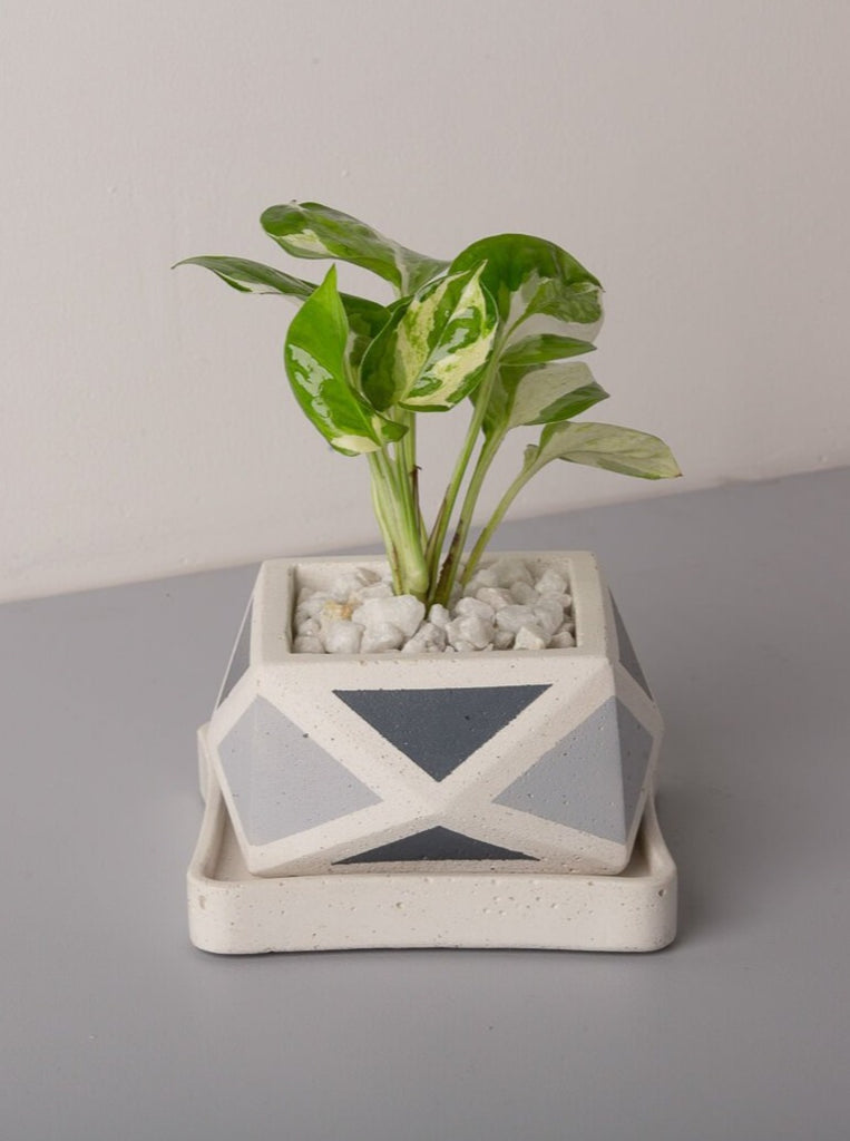 Concrete Crystal Planter-  Grey Invertrix Collection