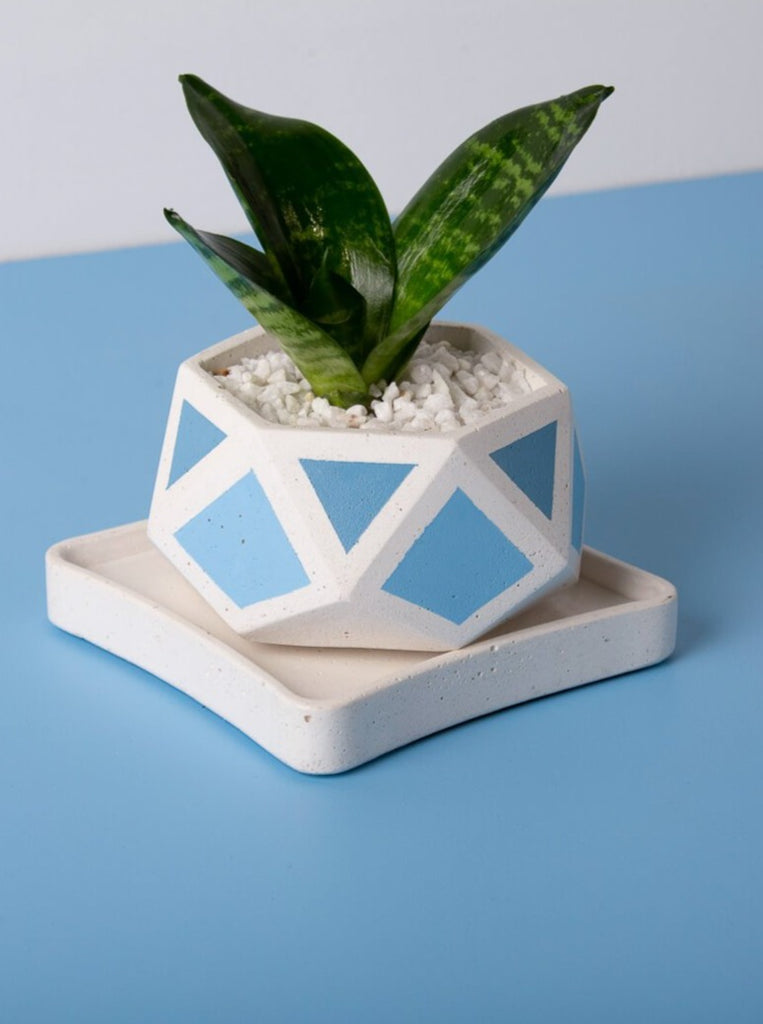 Concrete Hexamont Planter - Blue Invertrix Collection