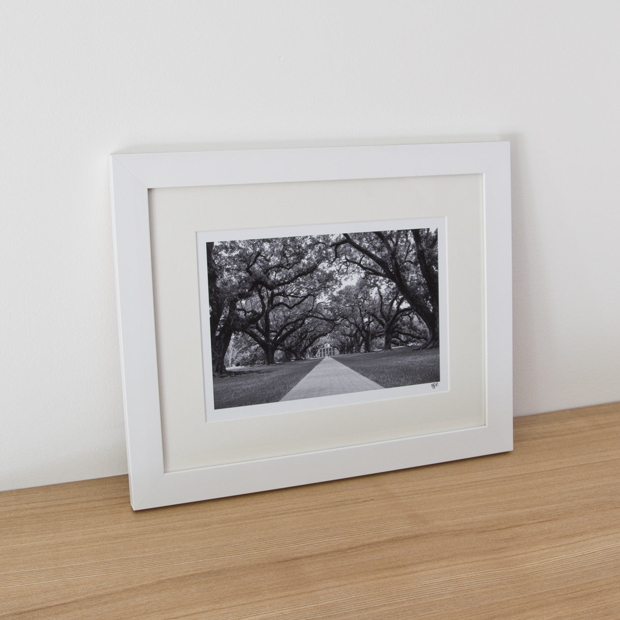 Framed Photograph - Oaks
