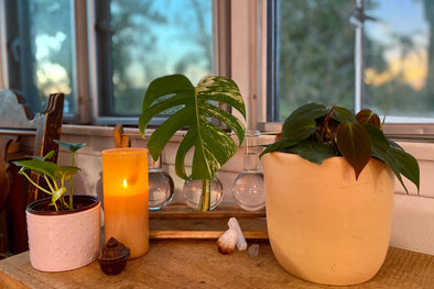 Grow at Your Own Pace: Mental Health & Houseplants by Ivy Moran
